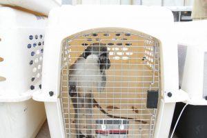 """קופים הועברו מעזה לרמת גן. צילום: דוברות מתפ""""ש"""