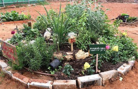 מוזמנים להתכבד: שבועות בגינות הקהילתיות ברמת גן