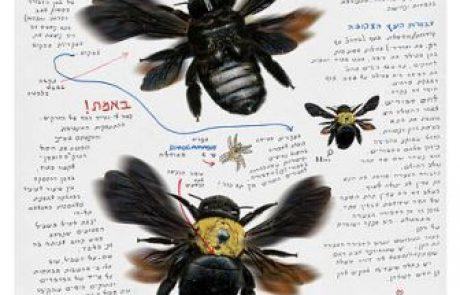 """תערוכה חדשה של פרחי בר וחרקים במוזיאון האדם והחי בפארק הלאומי ר""""ג"""