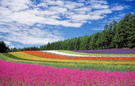 5 דברים שלא ידעתם על חופשה ביפן