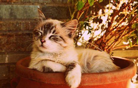 איזה סוג חתול אתם יכולים לאמץ?