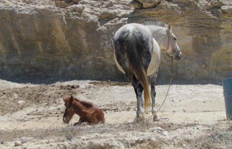 חנוכה במרכז ספורט רמת גן – תחרות קפיצות ראווה ויריד סוסים ואבירים חוויתי