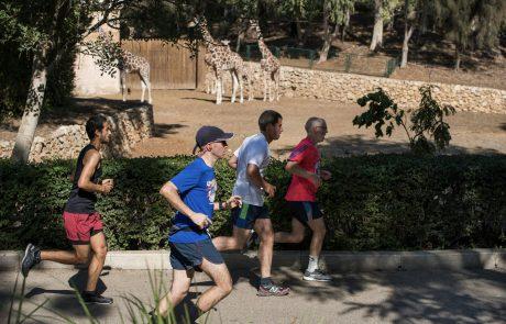 לרוץ עם ג'ירפות: מרוץ הספארי