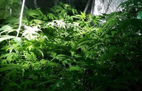 חשד: התפרצו לדירה ברמת גן ששימשה מעבדת סמים וגנבו קנאביס.