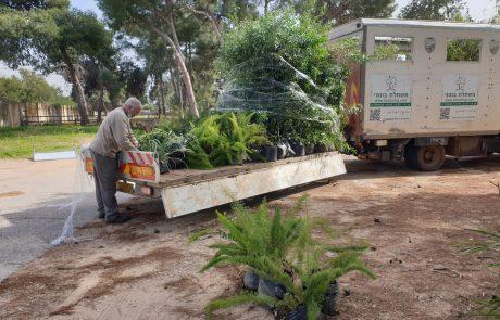 העירייה תקדם חלוקת עצים בוגרים מהספארי אל בתי התושבים