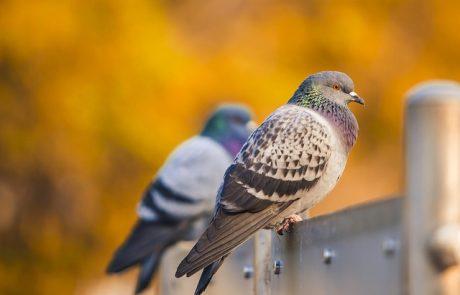 כיצד התקנת רשת נגד יונים מונעת כניסה ציפורים למרפסת