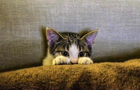 אז מה עושים כאשר מאמצים חתול חדש? 7 טיפים שיעשו לכם חיים קלים יותר