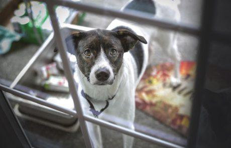 תרומה של מאות אלפי שקלים ל'תנו לחיות לחיות' ו'צער בעלי חיים רמת גן'