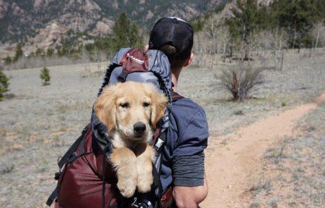 """האם לקחת את הכלב לחופשה בחו""""ל?"""