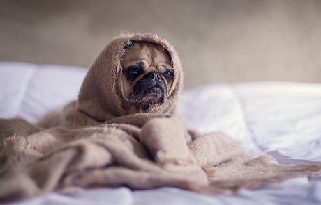 שיא החורף כבר כאן: כיצד נשמור על הכלבים והחתולים מפני הקור
